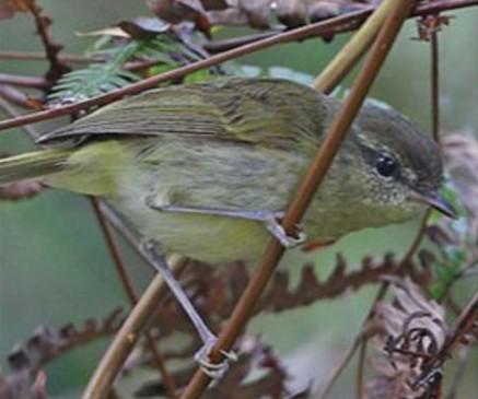 В Индонезии обнаружили 10 новых видов птиц за одну экспедицию