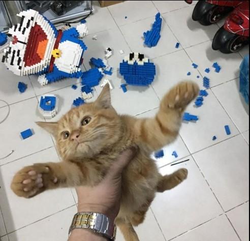 Кот разрушил поделку из 2,5 тысяч деталей LEGO