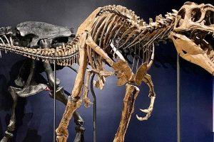 Представитель нового вида динозавров оказался детенышем тираннозавра