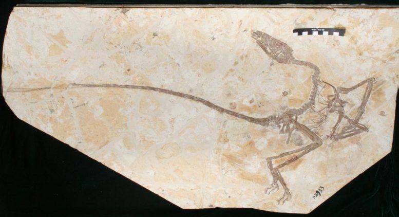 В Китае обнаружили скелет танцующего дракона