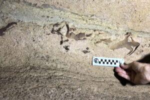 В самой длинной пещере на Земле обнаружили окаменевшую голову акулы возрастом 330 млн лет