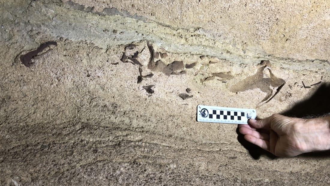 В самой длинной пещере на Земле обнаружили окаменевшую голову акулы возрастом 330 млн лет.Вокруг Света. Украина