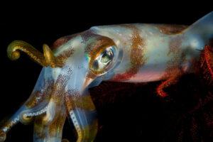 Ученые впервые в истории сделали МРТ кальмару