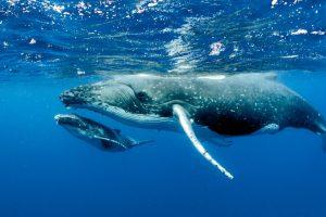 Китов будут считать из космоса
