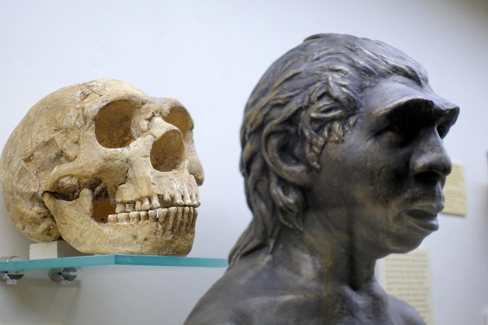 В геноме африканцев нашли следы неандертальцев