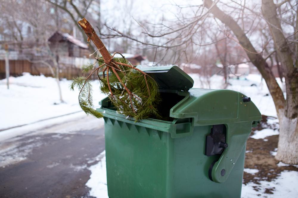 Пункты приема новогодних елок можно найти в приложении