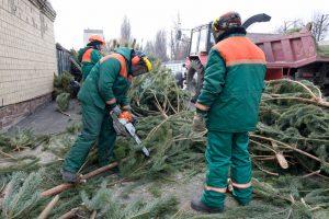 Вторая жизнь новогодней елки