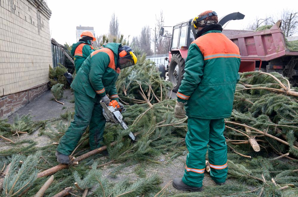 Вторая жизнь новогодней елки.Вокруг Света. Украина