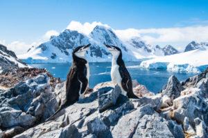 200 лет со дня открытия Антарктиды: как это было
