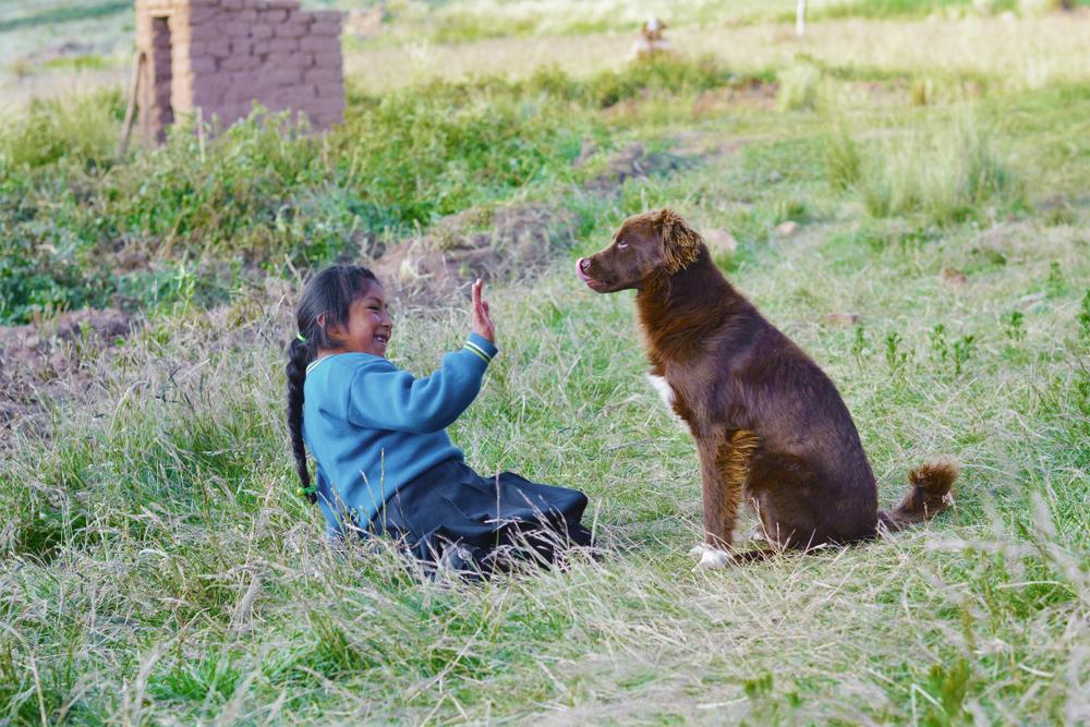 Дикие собаки понимают жестикуляцию людей