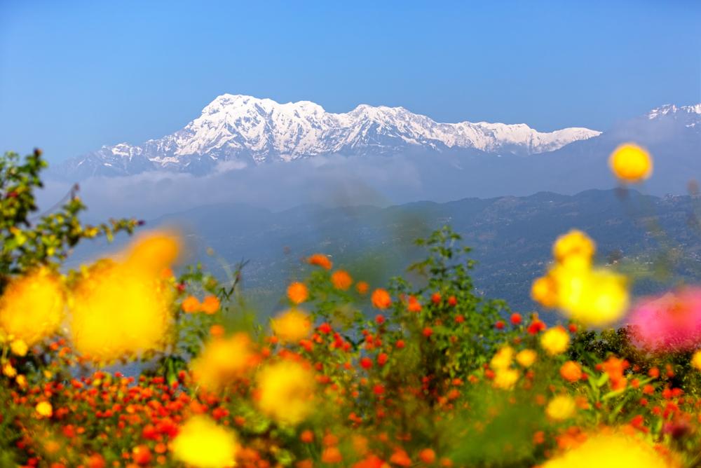 В Гималаях растения выросли там, где их никогда не было