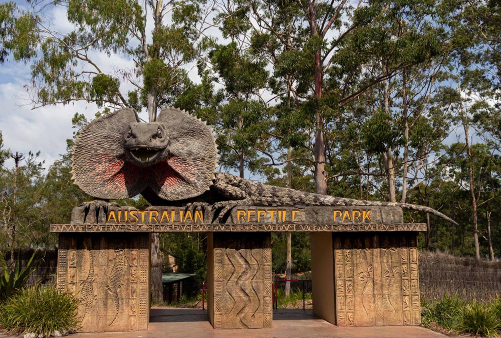 Новая опасность для коал: наводнение в зоопарке Австралии