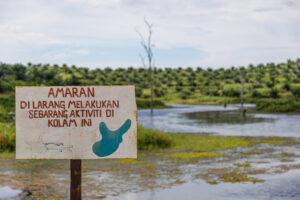В Малайзии крокодил съел рыбака