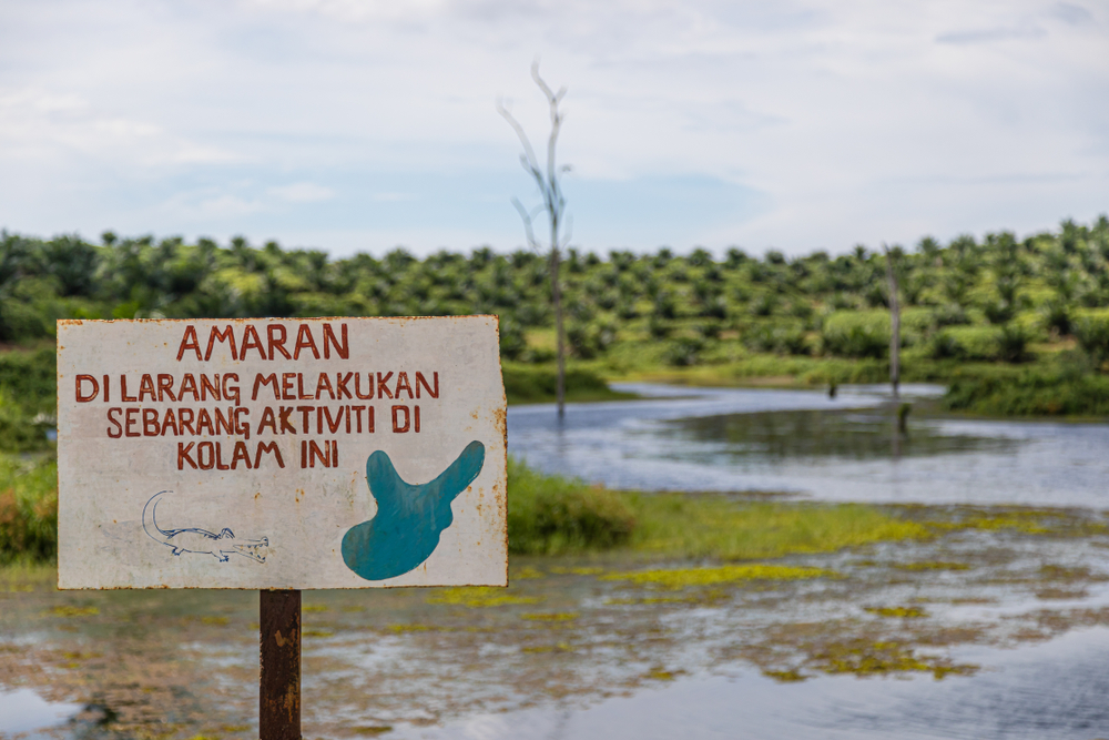 В Малайзии крокодил съел рыбака.Вокруг Света. Украина