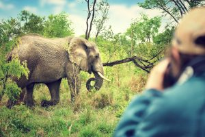 В нацпарке ЮАР борются с геотегами на фото туристов
