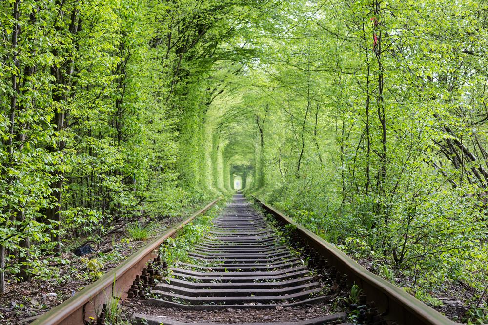 фото Ровно Туннель любви