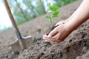 В Украине высадят миллион деревьев