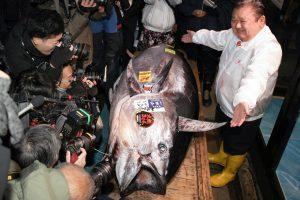 В Японии продали на аукционе тунца за 1,8 млн долларов
