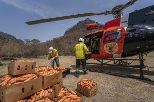 В Австралии с самолетов сбрасывают овощи для пострадавших в огне животных