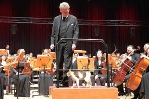 Бездомная кошка едва не сорвала концерт в Стамбуле