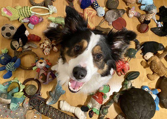 В Венгрии собака выучила 90 названий игрушек и научилась различать типы предметов