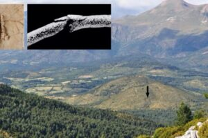 В Испании нашли следы резни времен каменного века