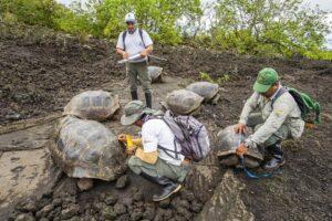 На Галапагосах нашли перекрестных потомков вымерших черепах