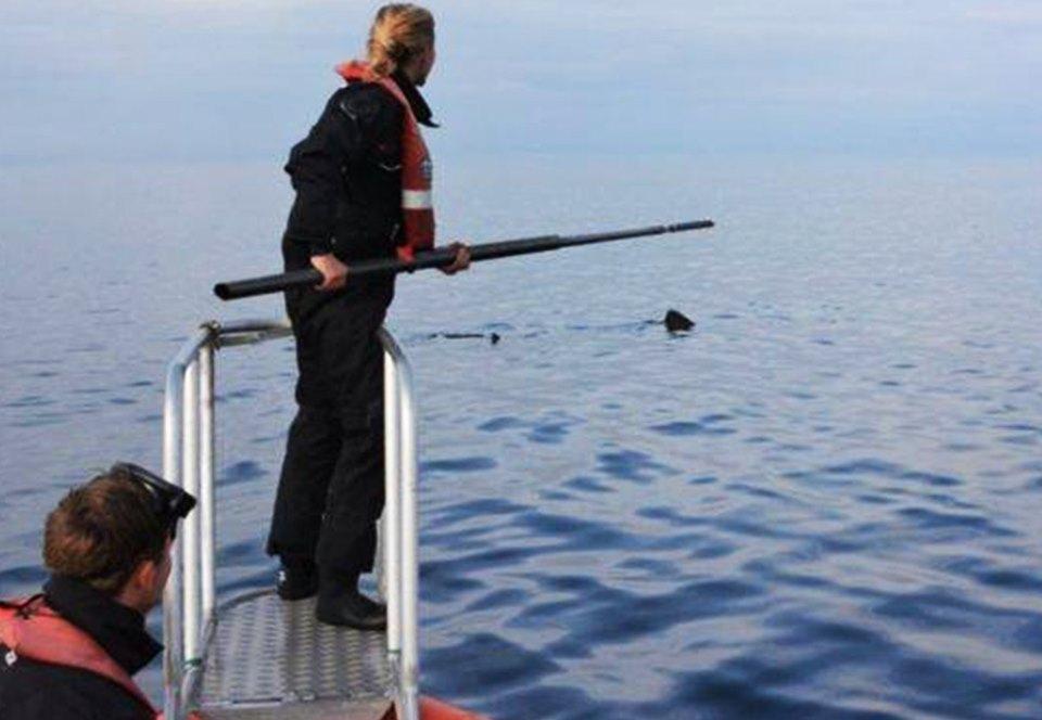 Миграция исполинских акул – это большая семейная тусовка.Вокруг Света. Украина