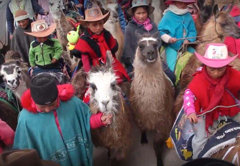 В Эквадоре состоялись ежегодные детские скачки на ламах