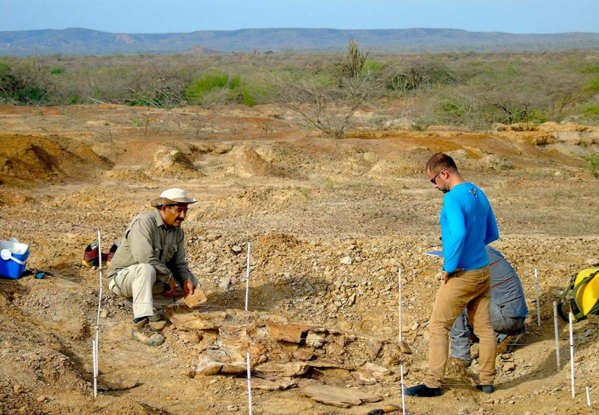 В Южной Америке найдены окаменелости крупнейших черепах древности