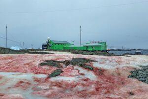 Снег вокруг украинской антарктической станции «Академик Вернадский» стал розовым