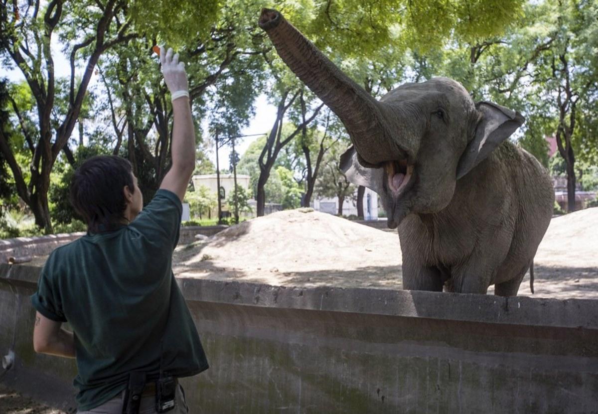 Слониха из Аргентины выйдет на пенсию в бразильском заповеднике