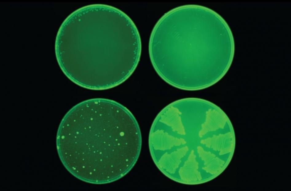 Искусственный интеллект разработал антибиотик, способный уничтожать резистентные бактерии