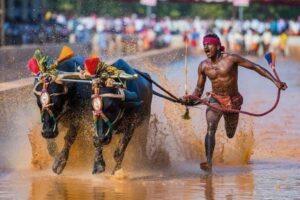 Индиец случайно поставил рекорд скорости в забеге по рисовому полю