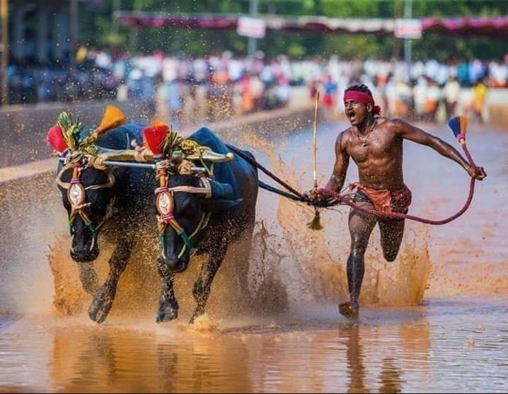Индиец случайно поставил рекорд скорости в забеге по рисовому полю.Вокруг Света. Украина