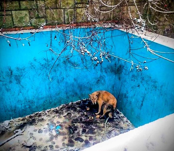 В Ужгороде полиция спасла собаку из ловушки