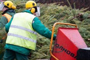 Киев поставил рекорд по утилизации елок