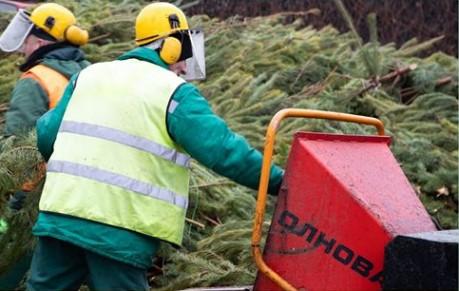 Киев поставил рекорд по утилизации елок.Вокруг Света. Украина