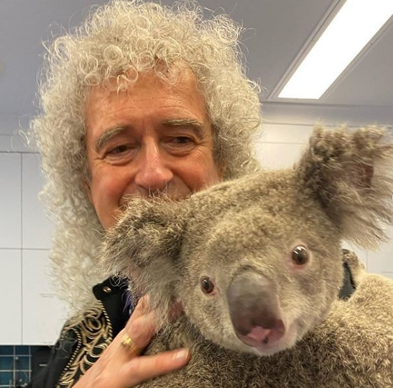 Гитарист Queen сыграл для австралийской коалы