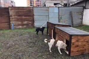 В Кривом Роге горожане придумали, как перевоспитать бездомных собак