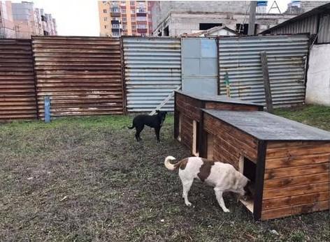 В Кривом Роге горожане придумали, как перевоспитать бездомных собак.Вокруг Света. Украина