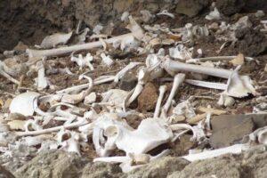 На Канарских островах впервые нашли мумии новорожденных