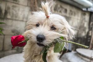 Топ-15 малоизвестных фактов о Дне святого Валентина