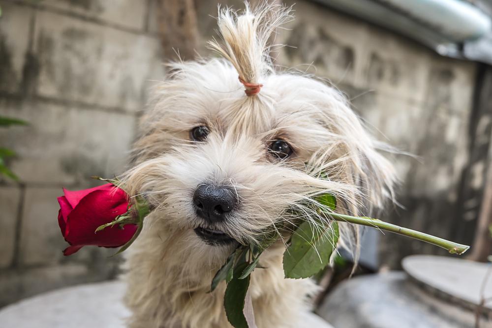 Топ-15 малоизвестных фактов о Дне святого Валентина.Вокруг Света. Украина