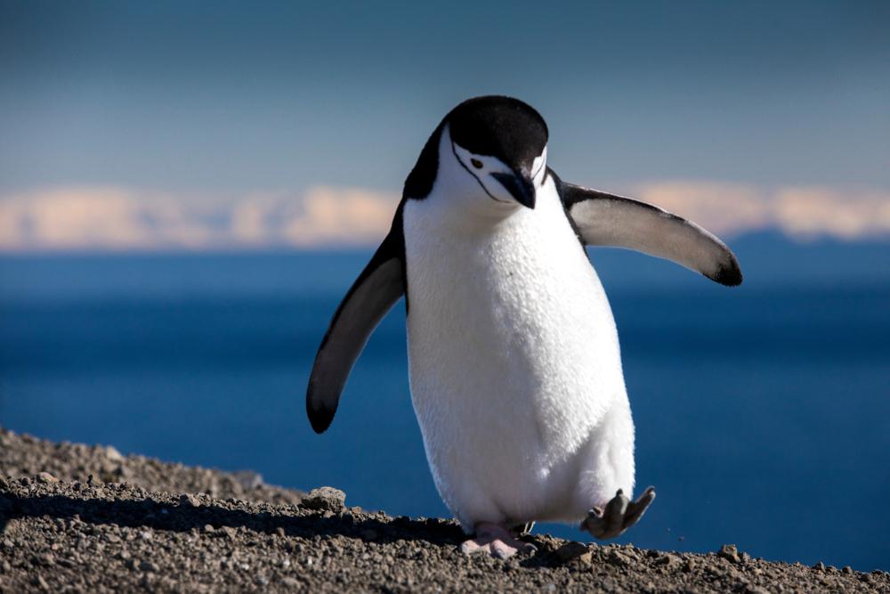 Антарктида разогрелась почти до 21 °C