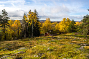 Кольцо, потерянное 47 лет назад в США, нашли в лесу в Финляндии
