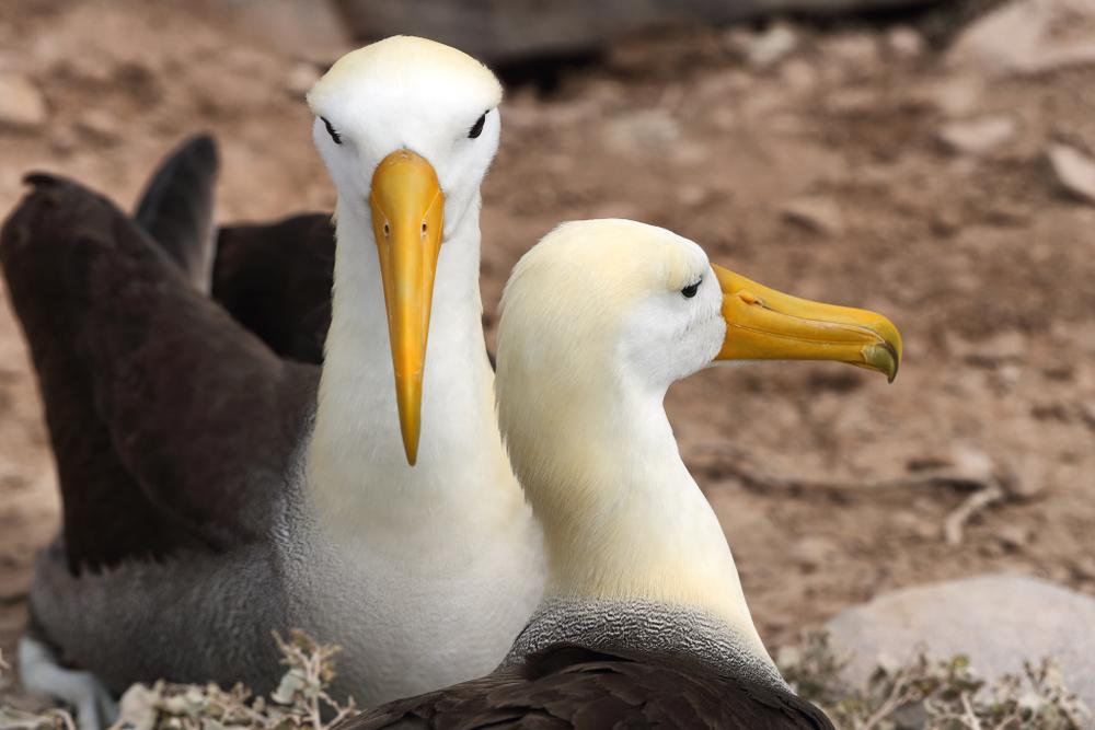 К 2050 году пластик может уничтожить 99% морских птиц