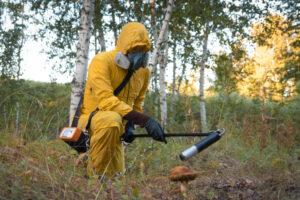 В Чернобыле нашли грибы, питающиеся радиацией