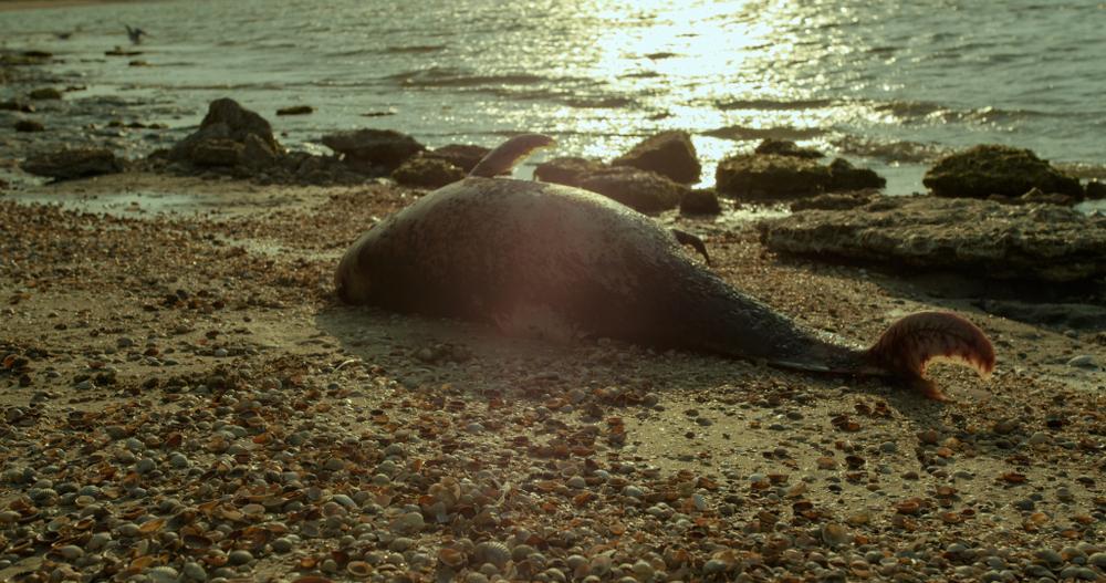 Сотни мертвых животных обнаружили на побережье Франции