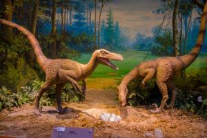 Кровь динозавров была теплой
